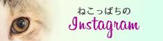 ねこっぱち Instagram