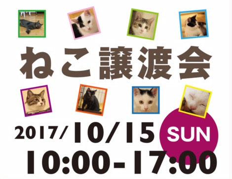 猫8初の譲渡会10月15日。