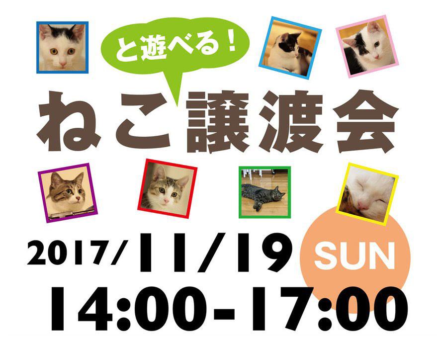 アメブロ「ねこっぱち!」〜譲渡会2回目のお知らせ〜