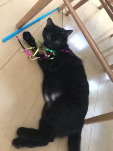 アメブロ「ねこっぱち!」〜月見近況と黒猫づくし〜