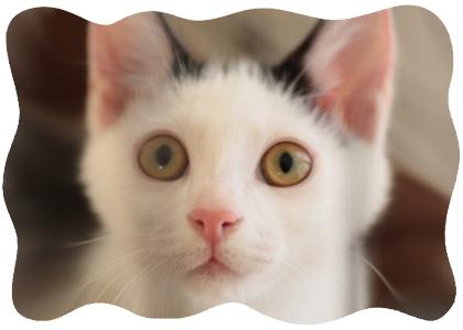 いきなり新連載♪ 猫8卒猫☆さなちゃんワイド☆「La gata SANA」秋本尚美先生